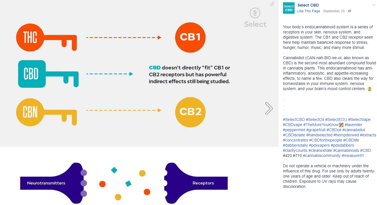cannabindiol-cb1-cb2-receptors-chart-with-cbd-thc-cbn